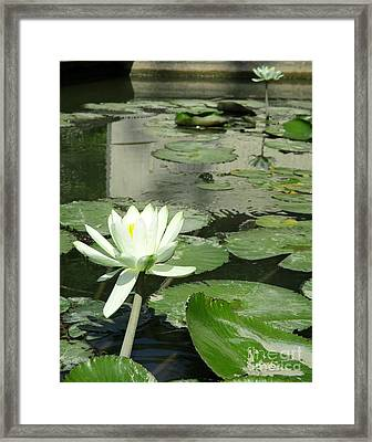 Framed Print featuring the photograph White Water Lily 3 by Randall Weidner