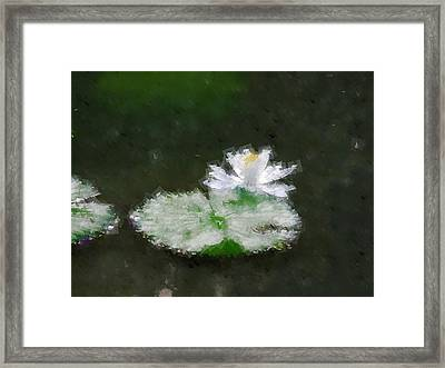White Water Lily And Leaf Framed Print