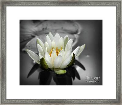 White Water Lily Black And White Framed Print