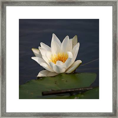 Framed Print featuring the photograph White Waterlily 1 by Jouko Lehto