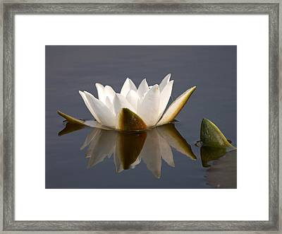 Framed Print featuring the photograph White Waterlily 2 by Jouko Lehto