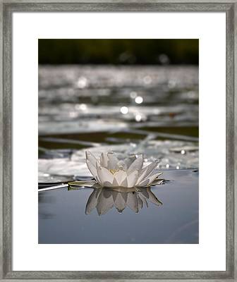 Framed Print featuring the photograph White Waterlily 3 by Jouko Lehto