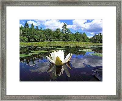 White Waterlily On A Lake Framed Print