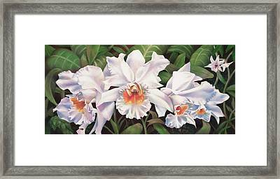 White Wedding Orchid Framed Print by Nancy Tilles