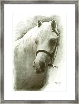 White Welsh Pony Framed Print