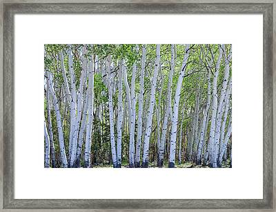 White Wilderness Framed Print by James BO Insogna