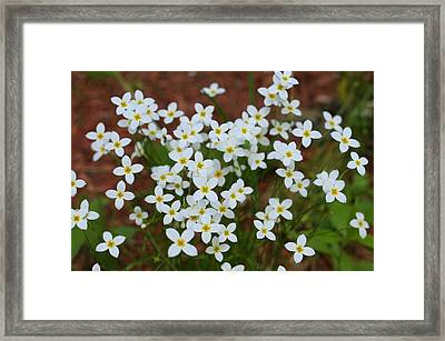 Framed Print featuring the digital art White Wildflowers by Barbara S Nickerson