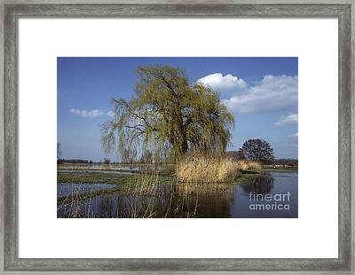 White Willow Framed Print by Jean-Louis Klein & Marie-Luce Hubert