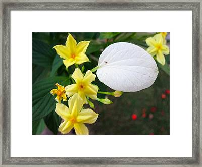 White Wings 1 Framed Print by Lanjee Chee