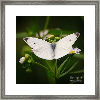 White Wings Of Wonder Framed Print