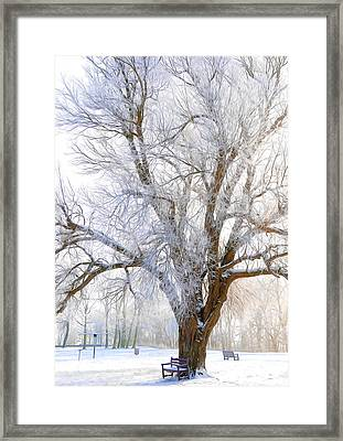 White Winter Tree Framed Print by Svetlana Sewell