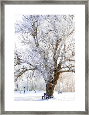 White Winter Tree Framed Print by Svetlana Sewell