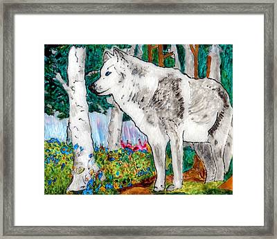 White Wolf In Spring Framed Print