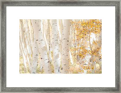 White Woods Framed Print by The Forests Edge Photography - Diane Sandoval