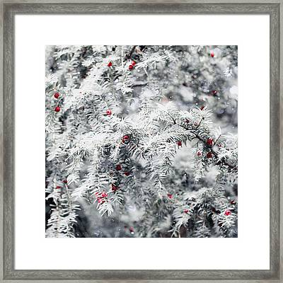 Framed Print featuring the photograph White Yew by Helga Novelli
