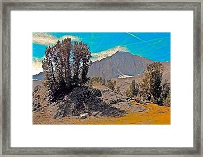 Whitebark Pine And North Peak Natural Framed Print