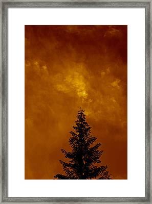 Whitebark Pine Near Sunset Framed Print