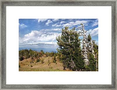 Whitebark Pine Trees Overlooking Crater Lake - Oregon Framed Print by Christine Till