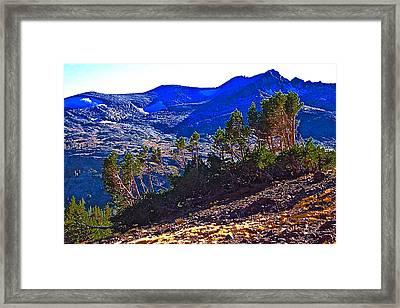 Whitebark Pines At Timberline V2 Framed Print