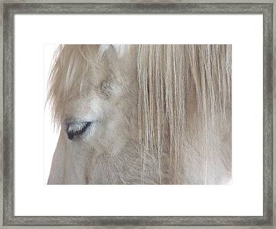 Whiteeyes Framed Print by Todd Sherlock