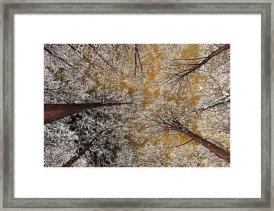 Whiteout Framed Print by Tony Beck