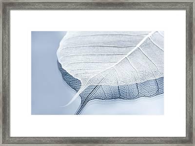 Whiter Shade Of Pale Framed Print by Maggie Terlecki