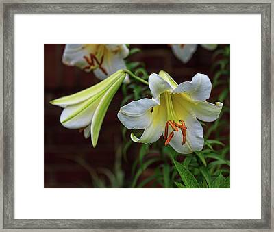 Framed Print featuring the photograph Whites by Robert Pilkington
