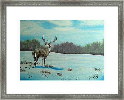 Whitetail Buck Framed Print
