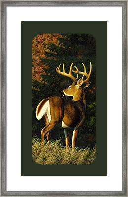 Whitetail Buck Phone Case Framed Print by Crista Forest