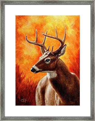 Whitetail Buck Portrait Framed Print by Crista Forest