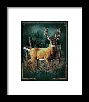 Whitetail Framed Prints