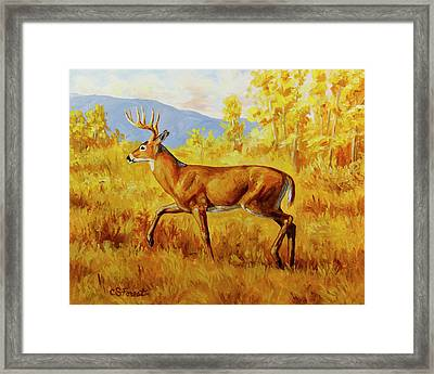 Whitetail Deer In Aspen Woods Framed Print by Crista Forest