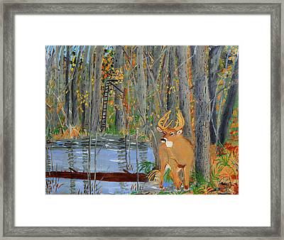 Whitetail Deer In Swamp Framed Print