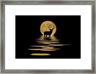 Whitetail Deer In The Moonlight Framed Print
