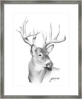 Whitetail Deer Framed Print by Larry-DEZ- Dismang