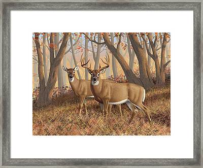 Whitetail Deer Painting - Fall Flame Framed Print by Crista Forest
