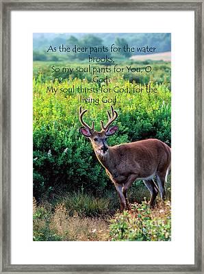 Whitetail Deer Panting Framed Print