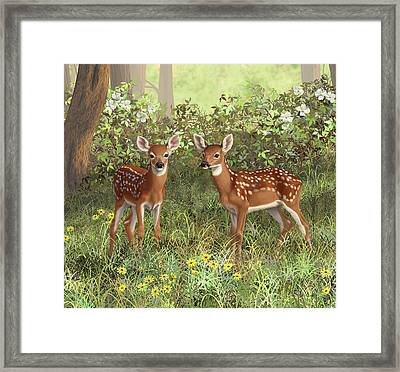 Whitetail Deer Twin Fawns Framed Print