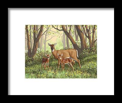 Twin Fawns Framed Prints