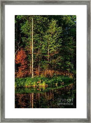 Whitetail Doe Morning Grazing Framed Print