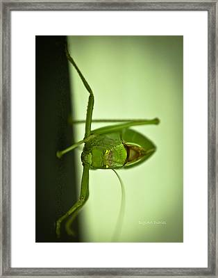 Who Are You Eyeballin' Framed Print by DigiArt Diaries by Vicky B Fuller