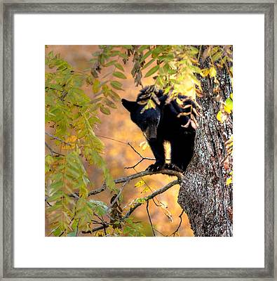 Who Are You Looking At Framed Print