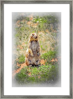 Who Dat? Framed Print by Mark Dunton