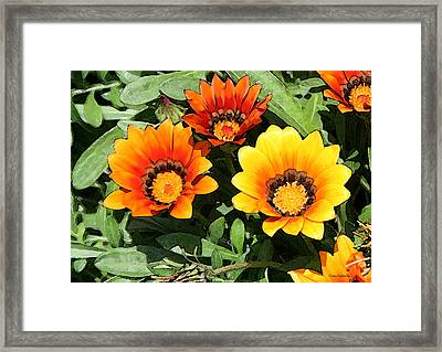 Who Gets The Attention Framed Print by Diana Gonzalez