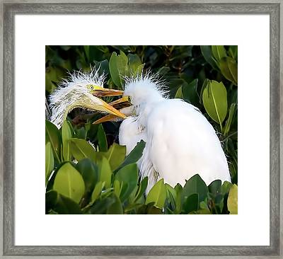 Who Gets To Eat First? Framed Print