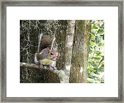Framed Print featuring the photograph Who Goes There by Terri Mills