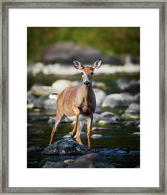 Who Goes There Framed Print by Bill Wakeley
