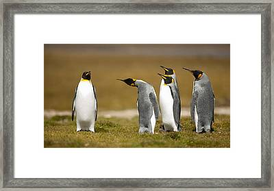Who Has Been? Framed Print
