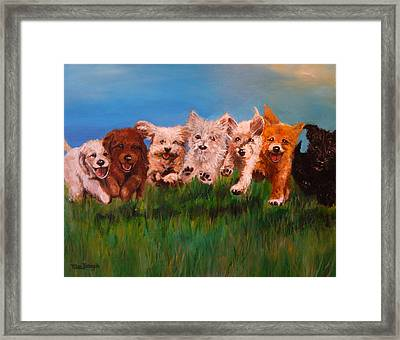 Who Let The Dogs Out Framed Print by Terry Cox Joseph