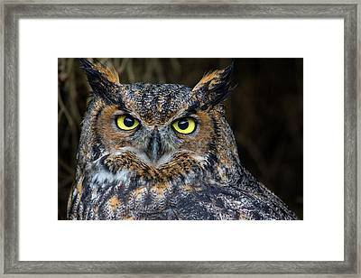Who, Me? Framed Print by Brent L Ander